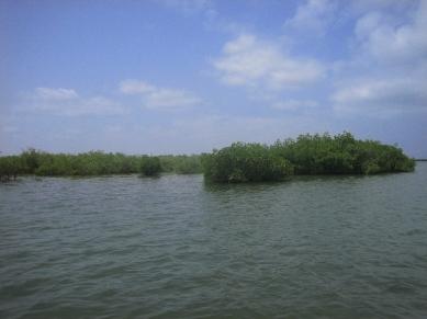 Manglares Delta Saloum